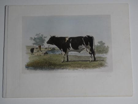 Antique lithograph with modern watercolors.