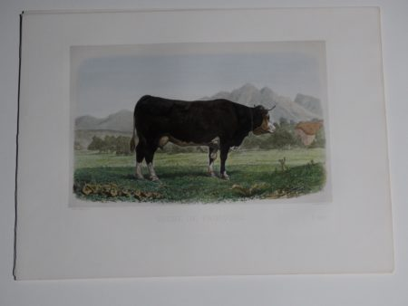 Sourced from Les Races Bovines au Concours Universel Agricole.