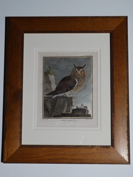 Great Horned Owl engraving over 250 years old for Buffon.