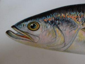 Sealife & Fish
