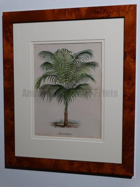 decorative palm art burl  frames