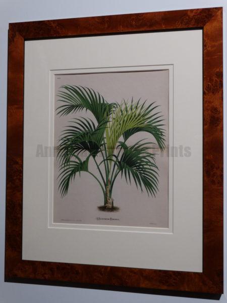 Antique Palm Lithograph Burl Frame