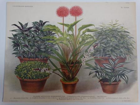 Newly introduced plants. Winners at the L'Horticulture Internationale Bruxelles. Late 19th century Gardening Show.