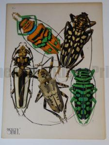 Pochoir Insects Seguy plate4