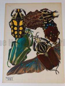 Seguy Insectes Beetles11