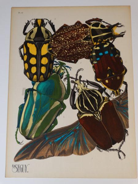 Seguy Insectes Beetles11