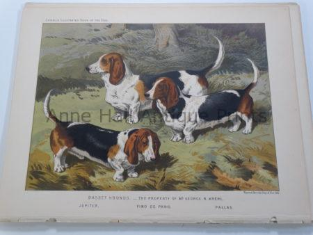 Antique Lithograph Bassett Hounds Famous Bloodlines $150.
