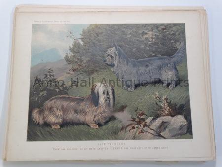 Antique Lithograph Skye Terriers Sam-Perkie Bloodlines