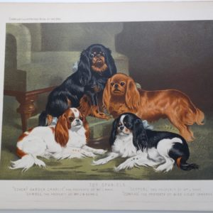 Cassells Toy Spaniels Antique Lithograph KCS King Charles $150.