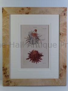 antique framed shell print