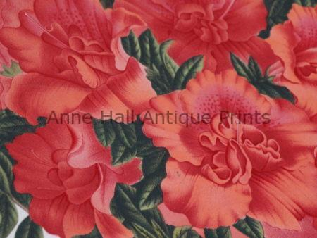 azaleas-rhododendrons in salmon or coral colors.