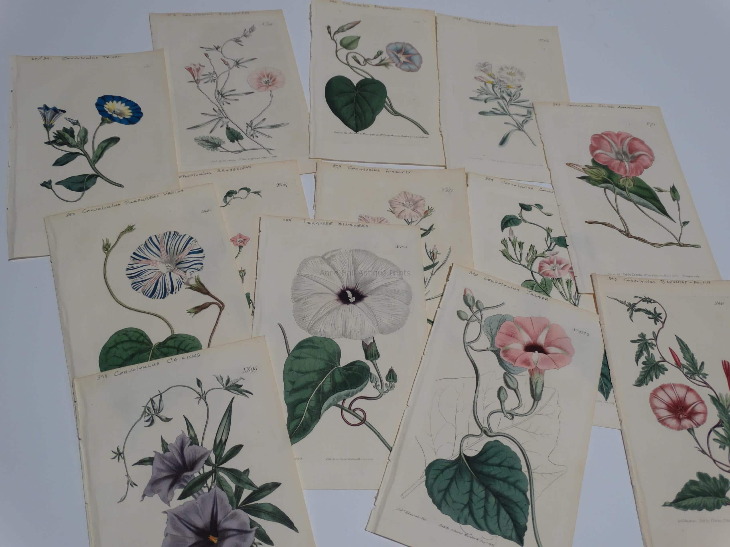 An exquisite collection of Other Special Flowers