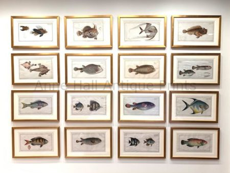 exquisite art collection tropical fish