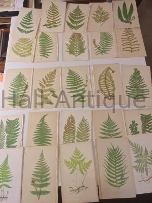 A set of 25 Lowe Ferns British & Exotic