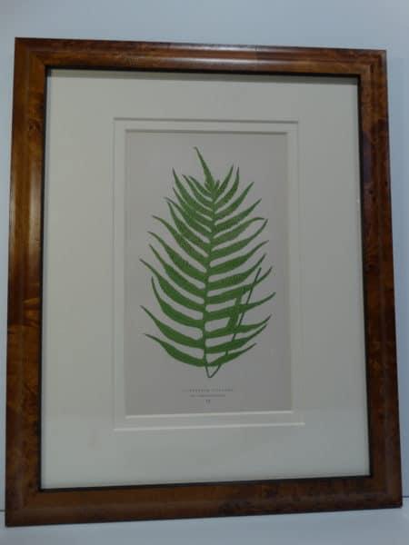 fantastic burlwood frame reflects spores in the fern