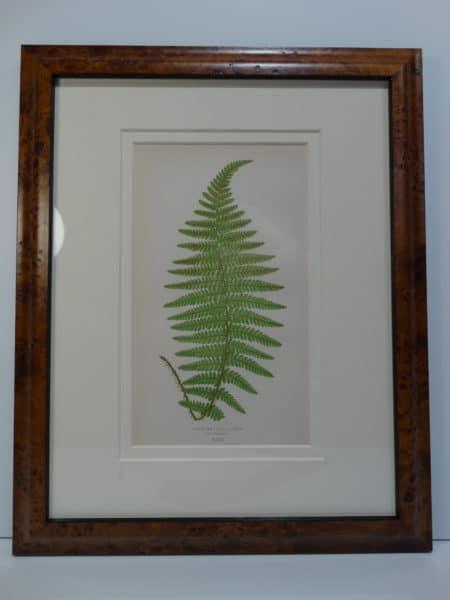 green fern lithograph burl wood frame