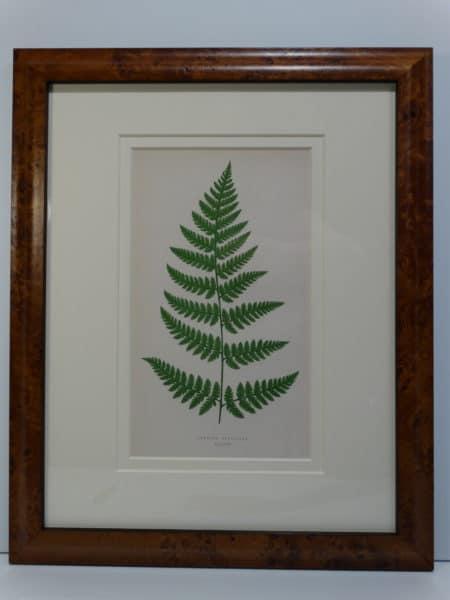 decorative antique fern bookplates