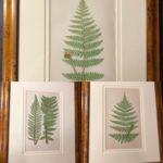 Ferns: British and Exotic E.J. Lowe Esq.