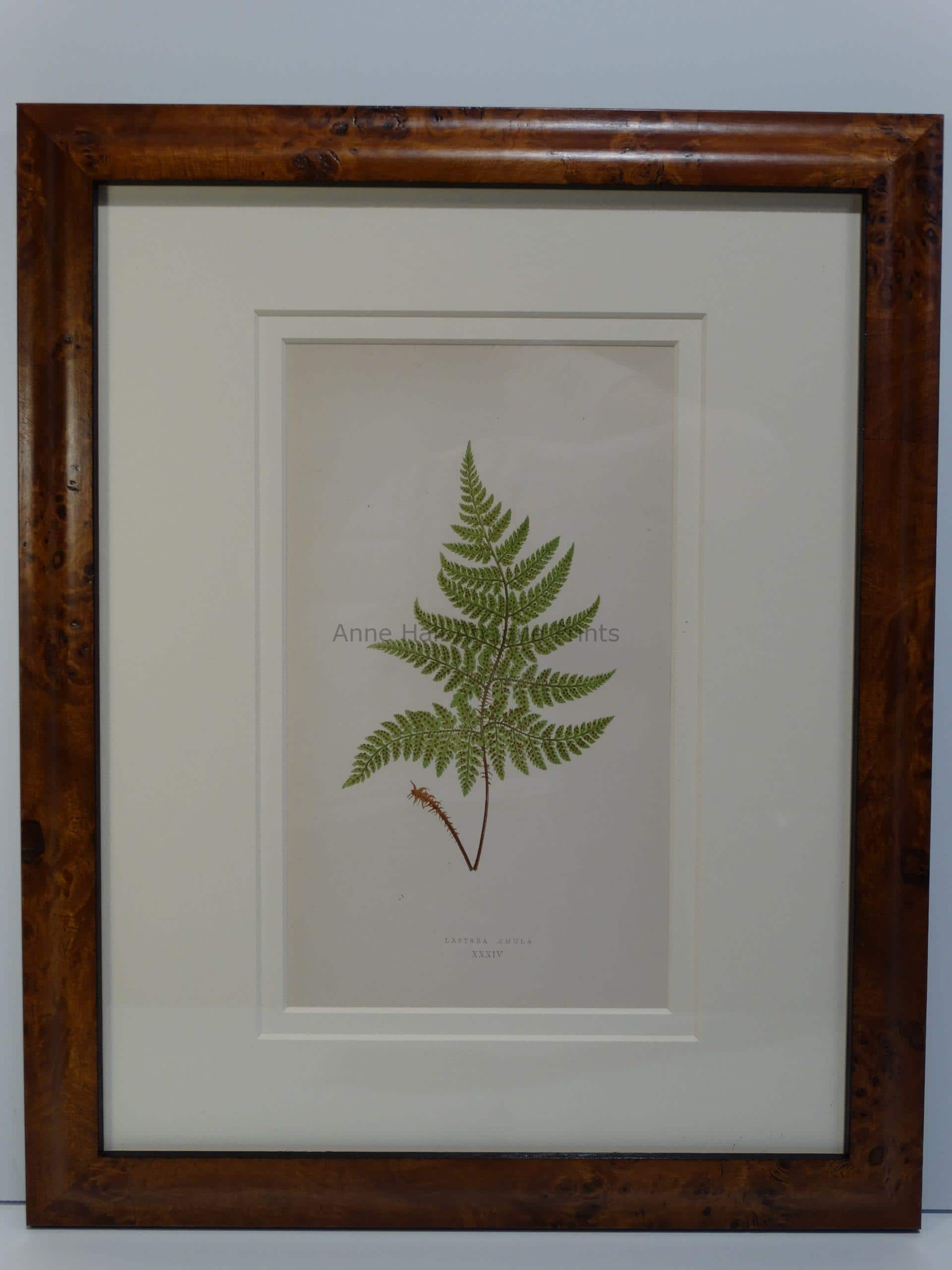 live with antique nature bookplates of ferns