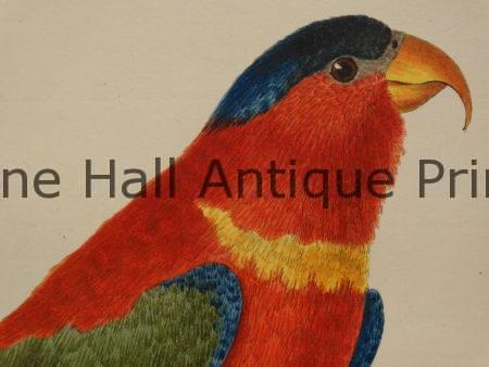 Perroquets Ara Martinet