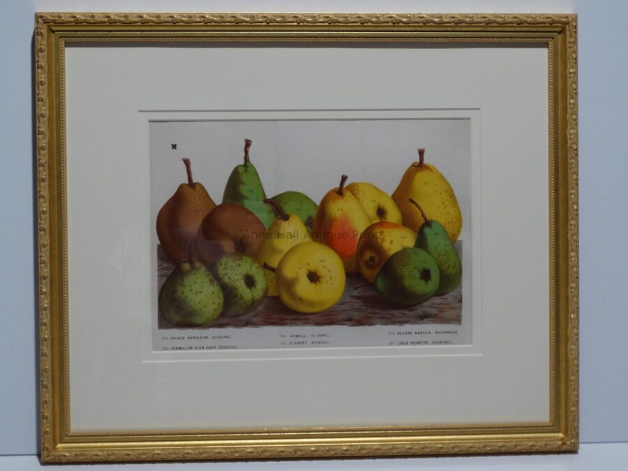gorgeous artwork of pears