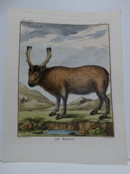 Coompte de Buffon, 1st edition reindeer engravings, in watercolors.
