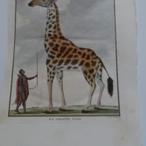 Exquisite 18th century engraving of a giraffe, next to African man.