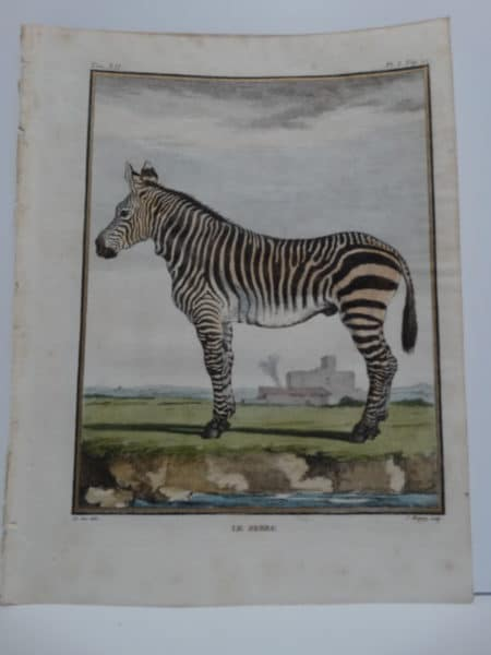 Exotic Species Buffon Zebra, Engraving by deSeve.