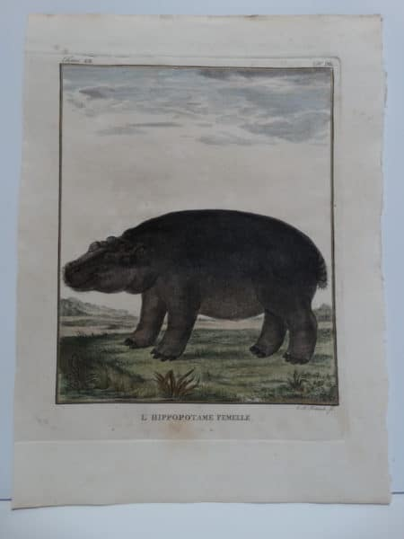 Rare 18th century hand-colored engraving of a hippo or hippopotamus, with expression and attitude.