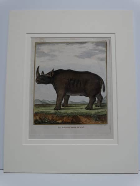 Rare engraving of a Rhinocerous, nearly 170 years old, matted up for picture framing.