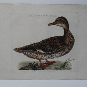 Antique Duck Art