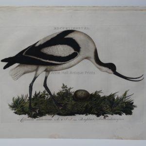 water bird with nest