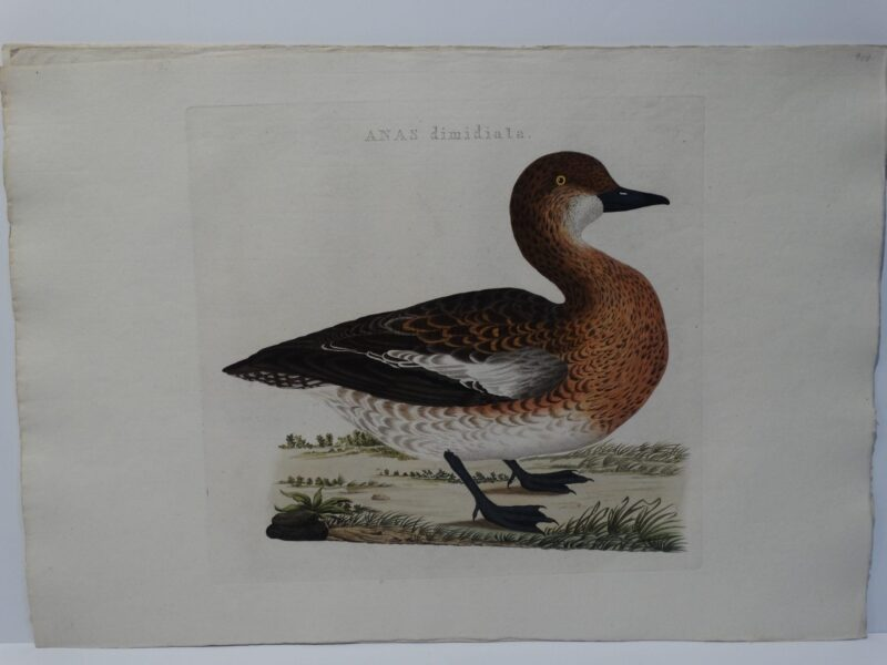 Gifts for Duck Hunters