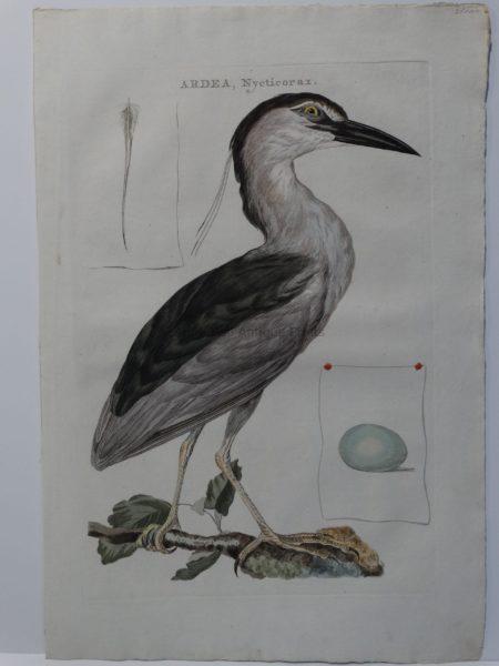 Beautiful Heron Artwork