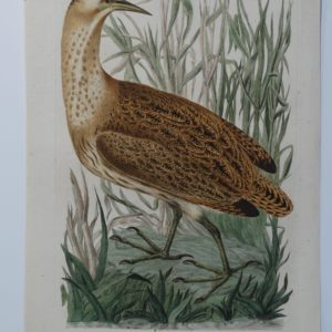 water bird paintings