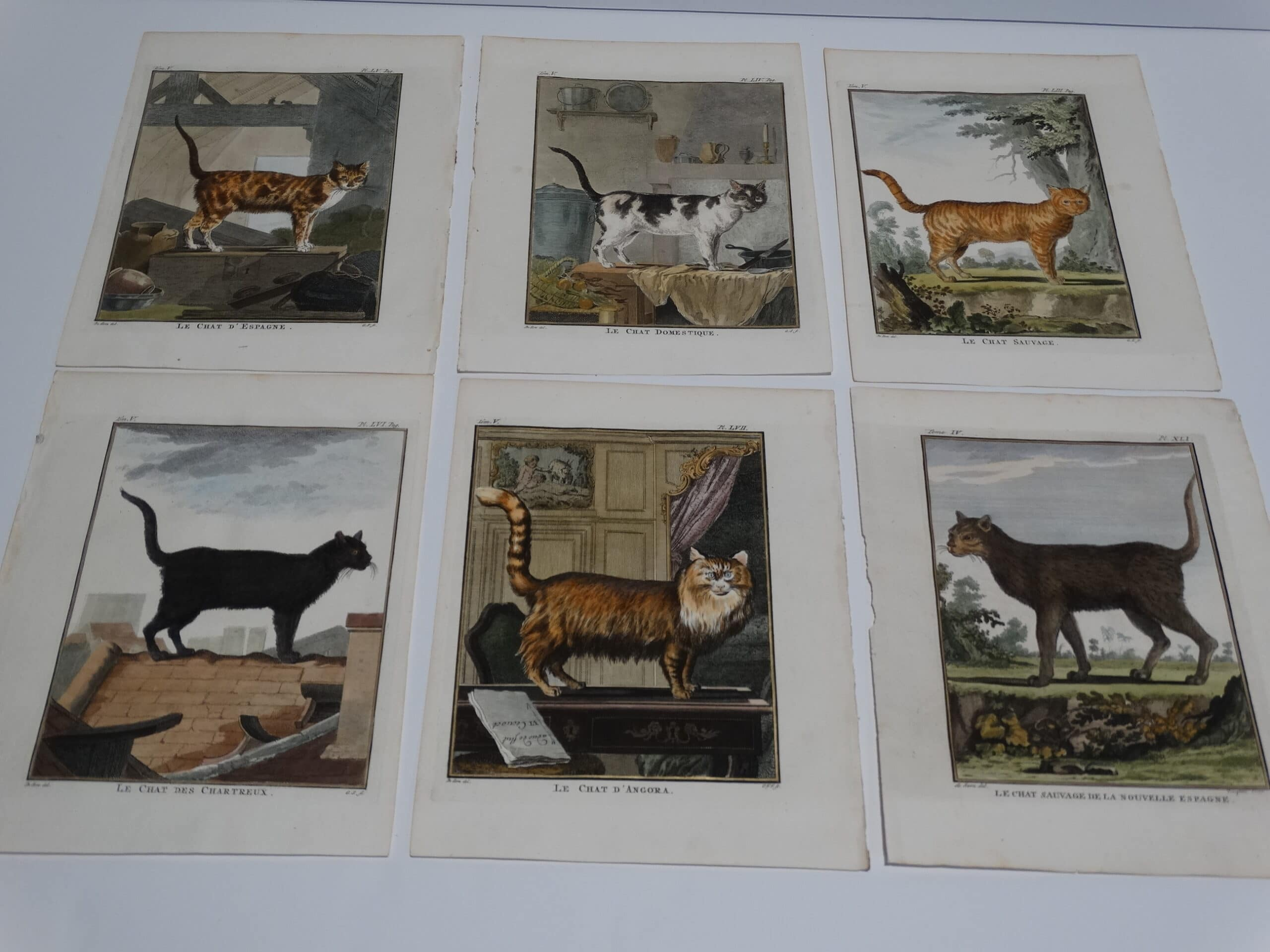 Find Compte de Buffon, 1st edition engravings of cats, and dogs.
