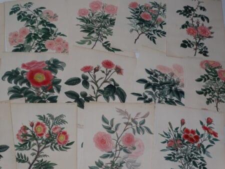 Exquisite rose garden bookplates