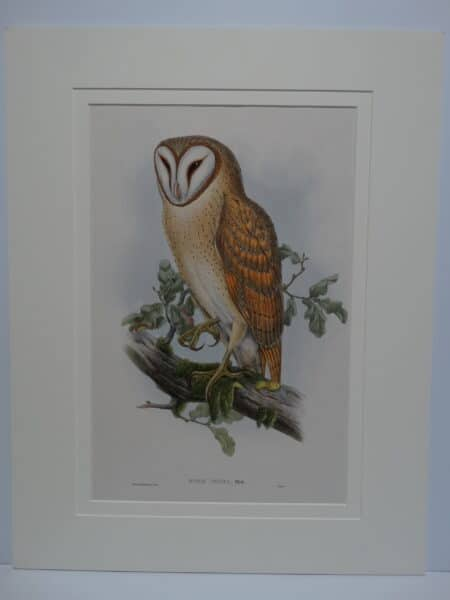 Striking antique lithograph over 170 years old of strixes.