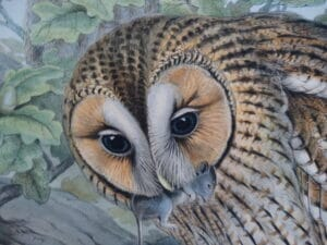 Find valuations on antique owl lithographs and engravings when you visit our website.