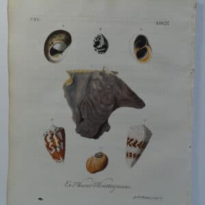 18th century George Wolfgang Knorr shell engraving hand-colored rare bookplate number 8.