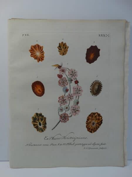 This antique engraving of limpet shell is an important conchology documentation from 18th century book entitled Verlustiging der Oohen en van Geest of Verzameling van allerley Bekende Hoorens en Sculpen.