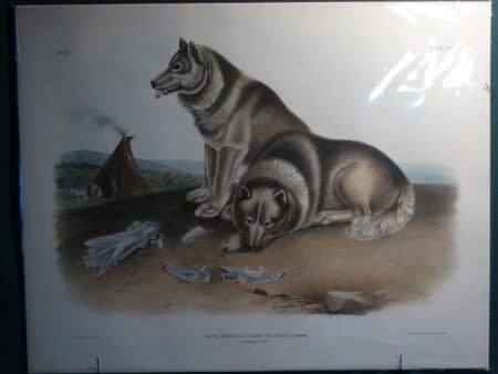 Canadian Inuit Dog Lithograph