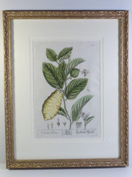 stunning artwork of lemons