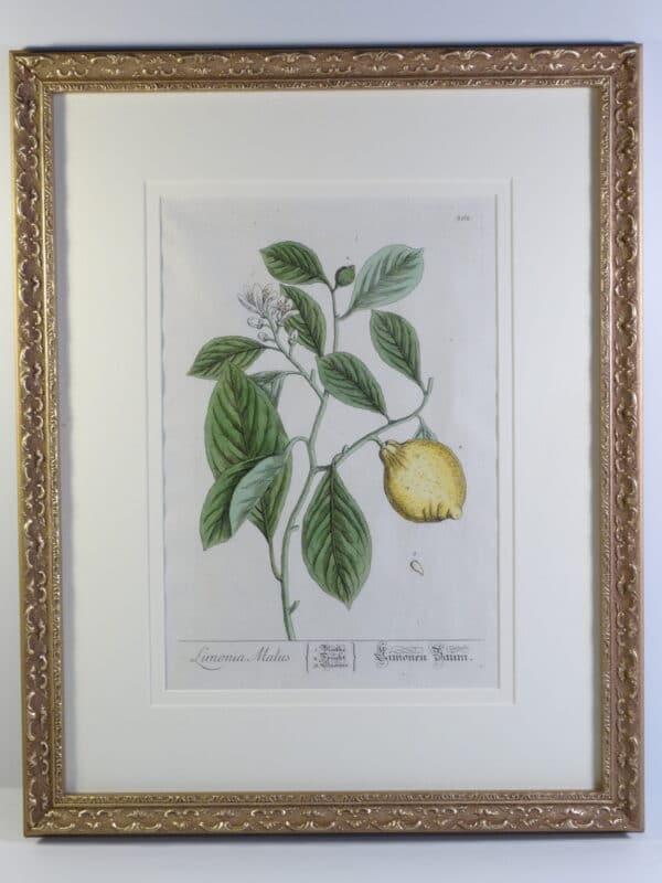 lemons beautiful artwork