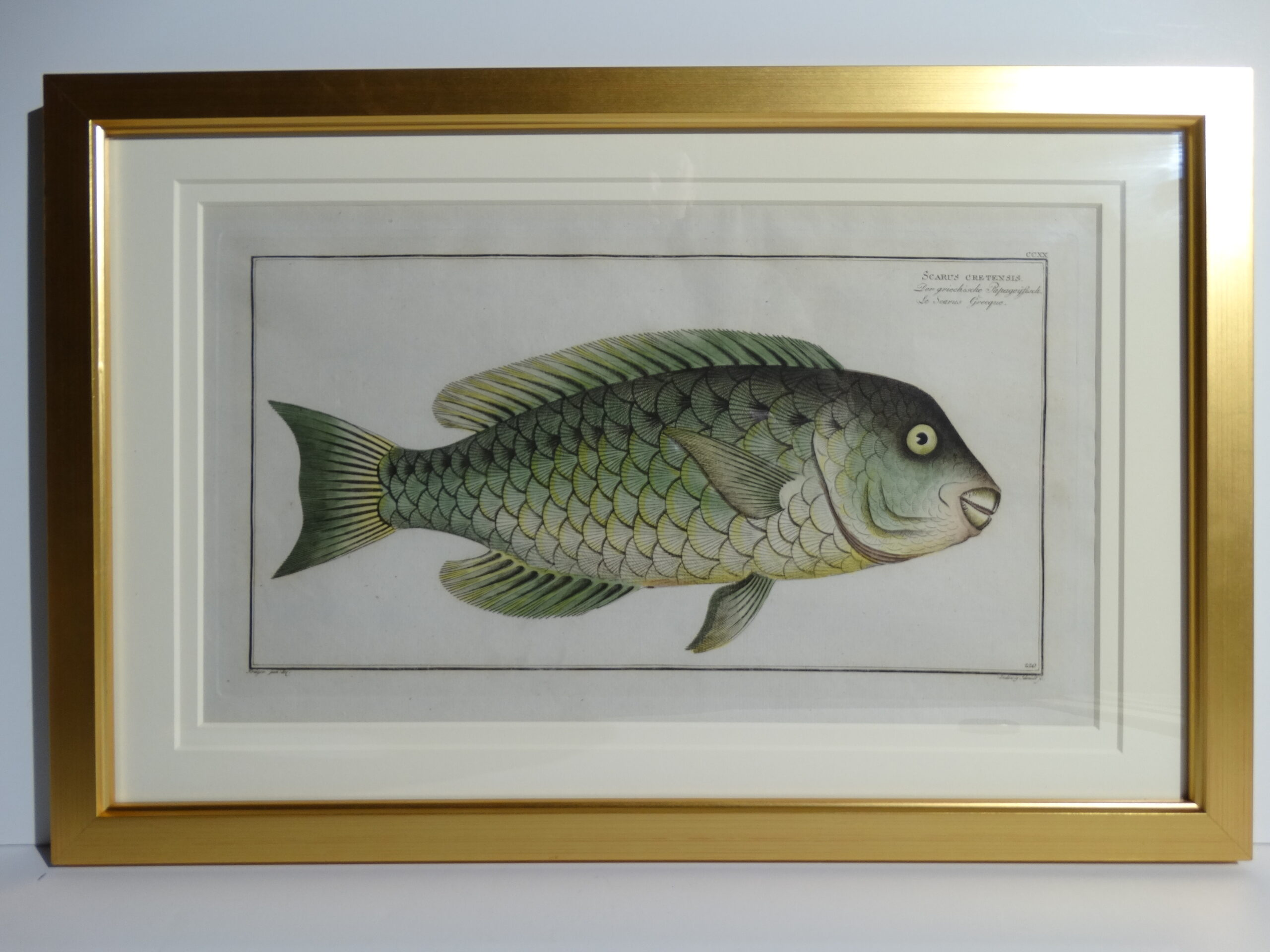 Bloch Fish Engraving Framed1