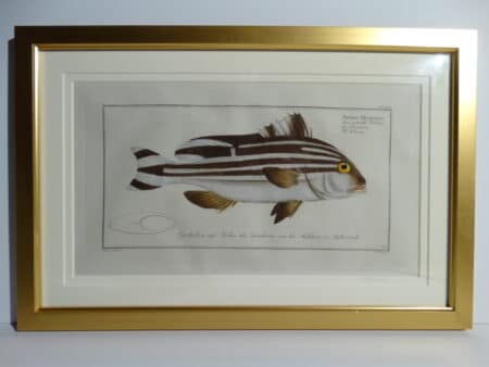 Bloch Fish Engraving Framed2