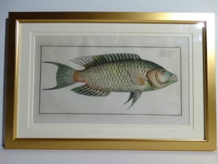 Bloch Fish Engraving Framed3