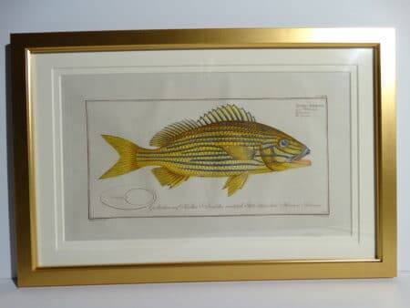 Bloch Fish Engraving Framed4