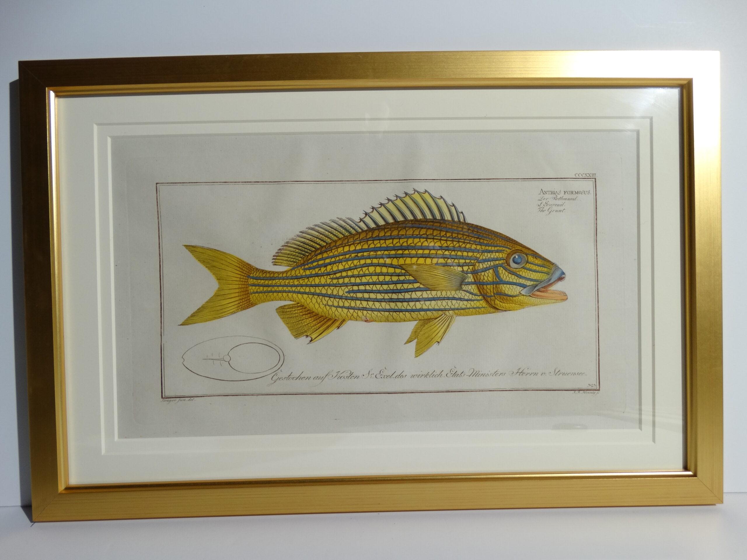 Bloch Fish Engraving Framed4