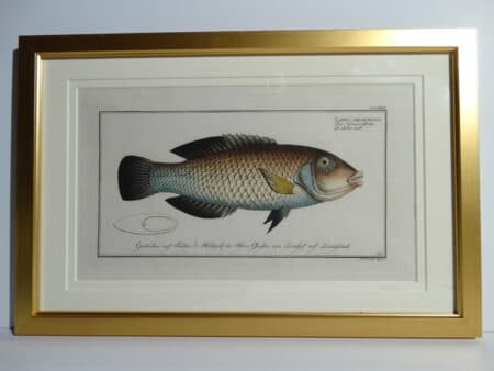 Bloch Fish Engraving Framed6